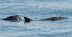 Partaker   Help Save the Vaquita - Tell the U.S. government to take immediate action to stop the illegal wildlife trade of vaquitas.