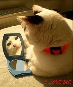 cat:I am beautiful,i love myself