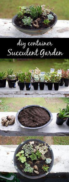 DIY Succulent Container Garden!  Craft this DIY succulent container garden for Mother's Day! These easy to care for and easy to make succulent container gardens make wonderful homemade Mother's Day gifts! Not only do these look great both indoors and out, but they are extremely low maintenance! #mothersdaygift #succulent #containergardening #diy #gardenideas