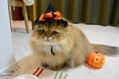 "foo-chan: "" Happy Halloween!! http://foo-chan.com/ """