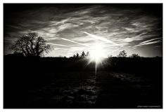 DAVID ANGELETTI PHOTOGRAPHIES   D 901 #morning #sky #black&white #tree #sun