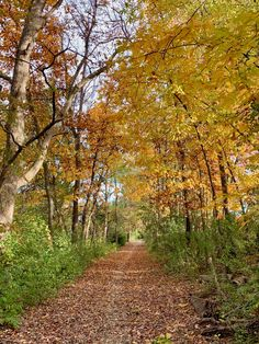 Find the best places to see Northern Virginia fall foliage and beautiful autumn colors on fun outings near Washington DC.