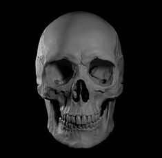 Digital sculpture, no scan used. There is still a room for improvement but not enough computing power :} I'll propably do some more rendering when I buy a new computer. Human Anatomy For Artists, Skull Reference, Skull Anatomy, Where Is My Mind, Skeleton Bones, Human Skull, Skull Art, Sculpting, Skeletons