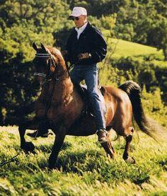 Bey Shah b. 1976 Bay el Bey x Star of Ofir by Bask English Tack, Beautiful Arabian Horses, Horse Breeds, Horse Stuff, Pretty Face, Equestrian, Vibrant Colors, Star, Horses