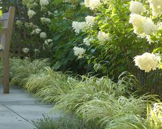 Monkey grass & hydrangea (I saw bushes, ferns, monkey grass- I liked the tiered look and those three together) Landscape Design, Garden Design, Path Design, Limelight Hydrangea, Hydrangea Paniculata, Monkey Grass, Chlorophytum, Garden Shrubs, Garden Pictures