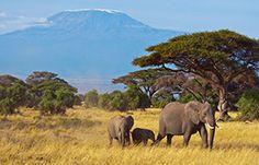 Safari kalender / Safari calendar / Safari calendrier / Safari Kalender
