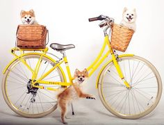 This photo is sure to bring a smile to your ride - happy weekend with your bike! RG @publicbikes