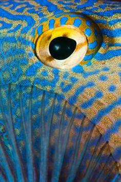 / Photo Durgon Triggerfish Eye by Paul Colley Underwater Creatures, Ocean Creatures, Regard Animal, Animal Close Up, Eye Close Up, Fotografia Macro, Deep Blue Sea, Mundo Animal, Sea And Ocean