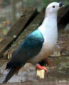 جمال الطيور