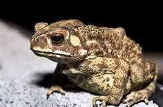 toad - Yahoo Hasil Image Search