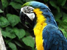 One of the parrots at Izmir Zoo