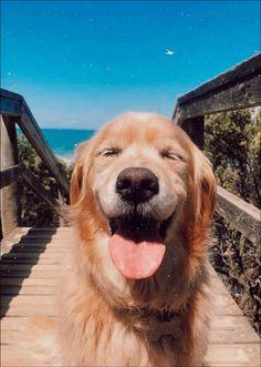 dexterguernon - 0 results for golden retriever Cute Little Animals, Cute Funny Animals, Cute Animal Pictures, Dog Pictures, Cute Dog Wallpaper, Cute Dogs And Puppies, Doggies, Retriever Puppy, Cute Creatures