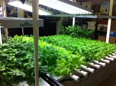 Indoor LED grow fixtures  http://highpower4s.com/new-technology-turns-night-into-day-for-growers/