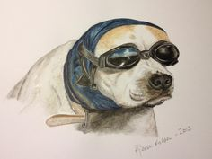 American Bulldog, Dakota with googles, ready for a nice ride. Using Derwent Pencils