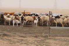 Définition d'un système d'élevage