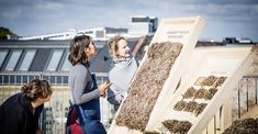 Viking-style seaweed thatch updated into prefab panelling Types Of Insulation, Insulation Materials, Architectural Technologist, Growing Moss, Contemporary Building, Vernacular Architecture, Thatched Roof, Header Image, Prefab