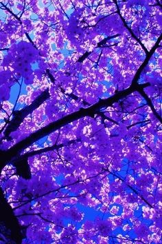 Beautiful Nature Photography Flowers Purple Trees 26 Ideas For 2019 Purple Love, All Things Purple, Shades Of Purple, Purple Art, Purple Trees, Purple Flowers, Flowers Nature, Beautiful Flowers, Beautiful Pictures