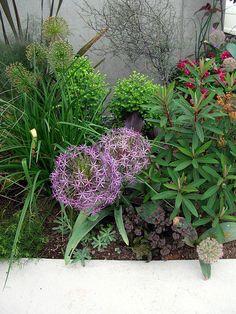[ ACID NATURE 乙庭 ]の画像 Garden Yard Ideas, Garden Styles, Flora, Plants, Gardening, Inspiration, Gardens, Balcony, Biblical Inspiration