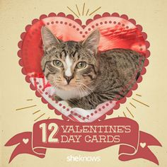 Give one of these purr-fect Valentine's Day cards to the one you love. Valentine's Day cat cards! #meme #cats #valentinesday