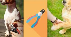 Trimming dog nails can be quite a chore, but there are easy tips, such as using the right dog nail trimmer, to help you do this without pain and stress.