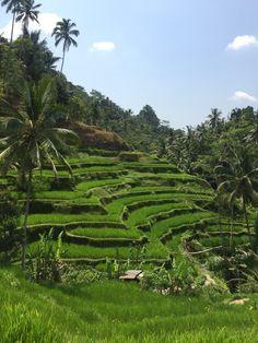 Tegallalang Rice Terraces in Gianyar, Bali