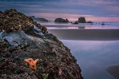 nejla terzi - Google+ - Sharing a sunset shot from Bandon Beach, along the Oregon… Bandon Oregon, Oregon Coast, Pacific Coast, Bandon Beach, Sunset, Water, Google, Travel, Outdoor