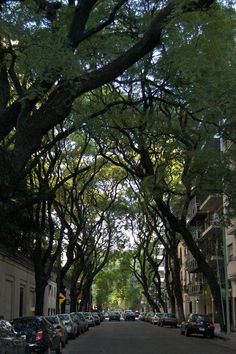 All sizes | Tipa Tree lined street | Flickr - Photo Sharing!