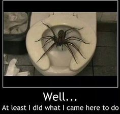 spider funy | Tags: damn spiders , funny pictures , humor , lol |