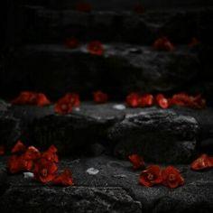 Gardian Angel, Red Aesthetic, Dark, Rose, Pink, Roses