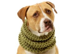 Beautiful knitted scarves for dogs.
