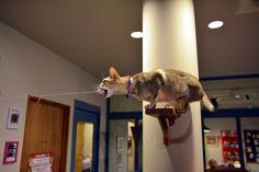 猫カフェ Cats Gallery
