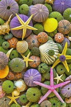 Frutos coloridos del mar.