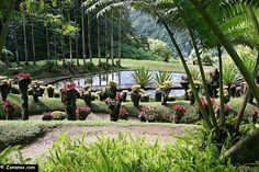 Nord Martinique : Le jardin de Balata.