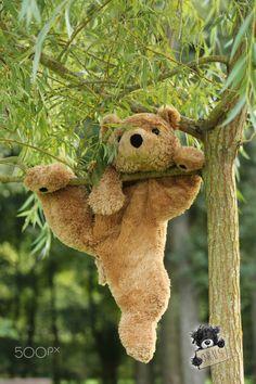 Orus - teddy bear travelling                                                                                                                                                                                 More