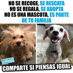 Lo ve dog Animals And Pets, Baby Animals, Funny Animals, Cute Animals, Mundo Animal, My Animal, I Love Dogs, Cute Dogs, Stop Animal Cruelty