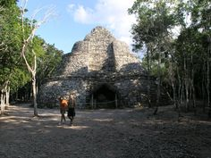 Coba Mayan Ruins (near Tulum, Mexico). Tour all the ruins during the trip, very old world, very cool.