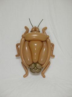 カメムシ shield bug 2016.4.16