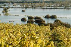 Le Marais de Goulaine est un des plus beaux paysages de Loire Atlantique. Un espace de nature à 30 minutes de Nantes où se balader en famille