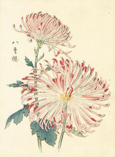Keika Hasegawa Chrysanthemum, 1893, Wood Block Print