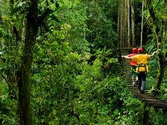 Costa Rica~Rainforest