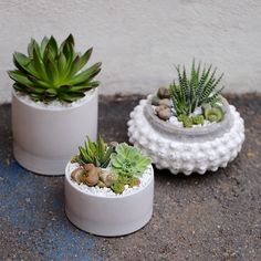Succulent arrangements in assorted white containers by Dalla Vita. DallaVita.com