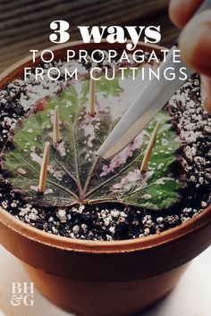 Whether you are starting from seed or dividing an established plant there are plenty of easy ways to multiply your houseplants. Whether you are starting from seed or dividing an established plant there are plenty of easy ways to multiply your houseplants.