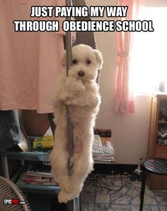 Funny Animal Pictures - View our collection of cute and funny pet videos and pics. New funny animal pictures and videos submitted daily. Pole Dance, Funny Dogs, Funny Animals, Cute Animals, Funny Memes, Animals Dog, Wild Animals, Collie, I Love Dogs