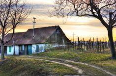 Abenddämmerung in der Kellergasse - - Korneuburg - meinbezirk.at Austria, Cabin, House Styles, Places, Basement, Landscapes, Environment, Woodland Forest, Templates