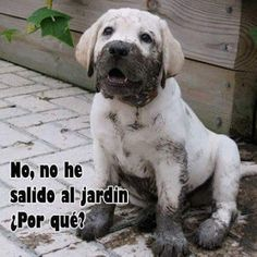 Funny Images of Dogs With Phrases - Labrador - Animales Cute Puppies, Cute Dogs, Dogs And Puppies, Doggies, White Lab Puppies, Rescue Puppies, Fun Dog, Baby Animals, Funny Animals