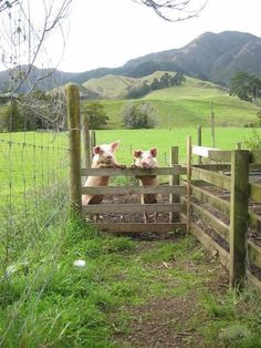 Country Woman At Heart ~~~ beautiful scene, although I'm not a fan of pigs! :)
