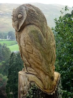 Owl carved from a tree.  Beautiful!