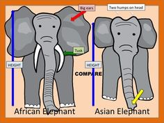 Planning a trip to the zoo? Starting a research unit on animals?   This product includes two PowerPoints, two lesson plans and two worksheets.  Students find animal information incredibly interesting (and so do teachers)!  The first PowerPoint gives 22 True/False statements about elephants, followed by the answers (some will surprise you!) Example: Elephants drink with their trunk.