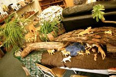 Jungle provocation.. at St Kilda & Balaclava Kindergarten. For more inspiring classrooms visit: http://pinterest.com/kinderooacademy/provocations-inspiring-classrooms/ ≈ ≈