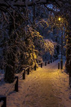 travelgurus:    Winter in Elmstead Wood - England   Travel Gurus - Follow for more Nature Photographies!